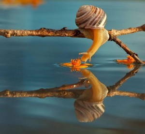 Earth Snails Mirror Water
